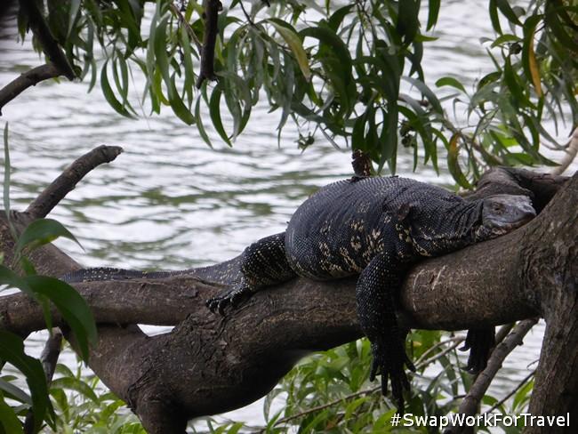Voluntourism in Sri Lanka